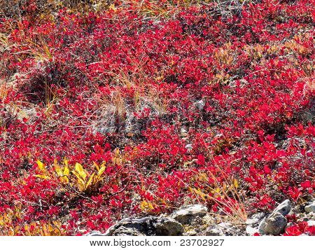 Red-golden alpine vegetation background