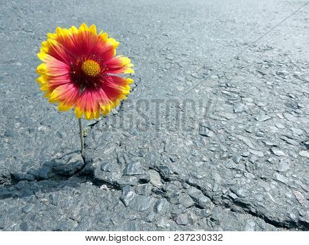 Crack On The Asphalt Road
