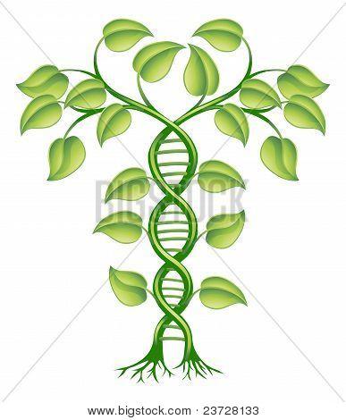 Concepto de ADN de la planta