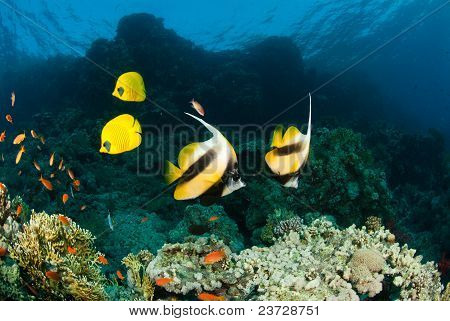 Fellow Fish