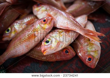 Close up of fish on display in a fish suq/market (Muscat, Oman)
