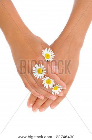 Hands of young woman with chamomile flower heads