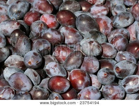 Damsons - Freshly Picked