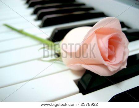 Klavier und rose
