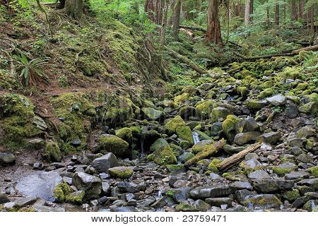 Moss Rocks And Flowing Stream