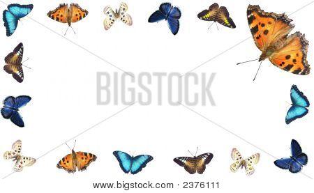 Varicoloured Butterflies