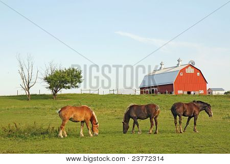 Three Horses And A Barn