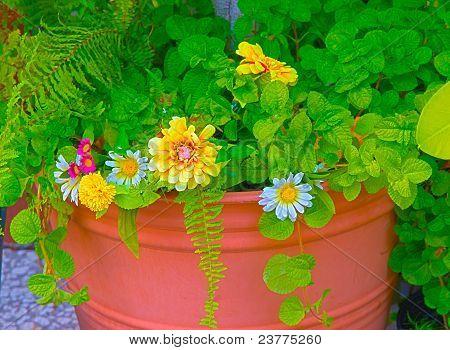 Daiseies In A Pot