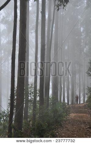 in the foggy woods