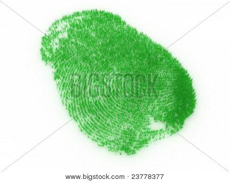 Fingerprint From Grass