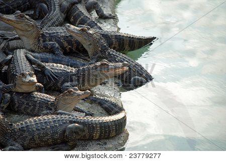Reptile Pile