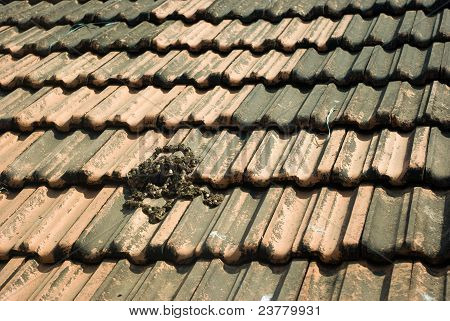 Goan Tiled Roof Texture