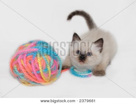 Kitten And Ball Of Colorful Yarn