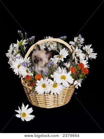 Flowers Arangement Gift Basket With Kitten Isolated