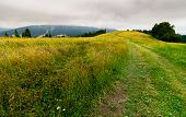 Country Road Through Grassy Fields In Mountains. Lovely Summer Countryside On Overcast Day poster