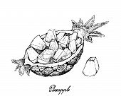 Fresh Fruits, Illustration Of Hand Drawn Sketch Of Sliced Pineapple Or Ananas Comosus Fruits Isolate poster