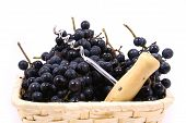 foto of gleaning  - Bunch of black juicy grapes over white - JPG