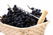 pic of gleaning  - Bunch of black juicy grapes over white - JPG