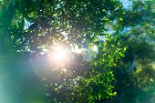 Fresh green tree foliage, the sun breaks through the lush leaves of a tree, abstract natural backgro poster