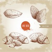 Hand Drawn Sketch Style Almond Set. Single, Group  Seeds And Almond In Nutshells Group. Organic Food poster