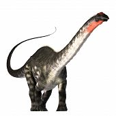 stock photo of giant lizard  - The Apatasaurus dinosaur was a herbivore of the Jurassic Era - JPG