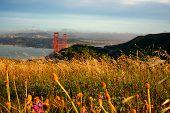Reed Grass On Headland, Golden Gate National Recreation Area, Golden Gate Bridge, The Presidio, San  poster