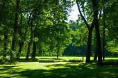 Summer Landscape - Summer City Park With Deciduous Green Trees In Sunny Weather. Colorful Sunny Summ poster