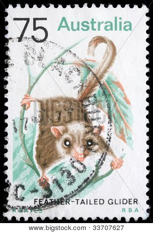 AUSTRALIA - CIRCA 1990s: A stamp printed in Australia shows image of a Feather Tailed Glider , series, circa 1990s