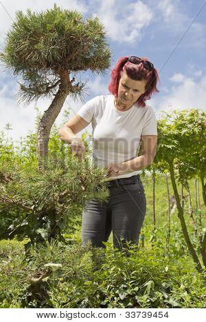 Women trimmming natural bonsai