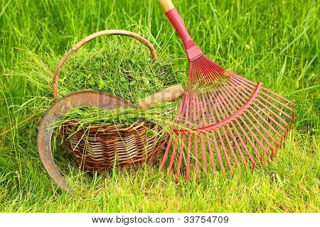 Fresh grass in basket with sickle and rake. Scene from rural garden in summer.
