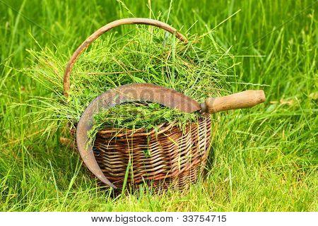 Fresh grass in basket and sickle. Scene from rural garden in summer.