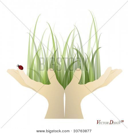 Lady bug and Fresh spring green grass on hand. Vector illustration.