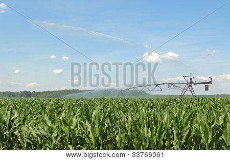 Watering Corn Crop