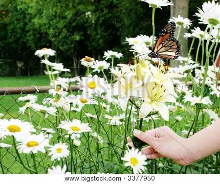 Flowers And Butterflay