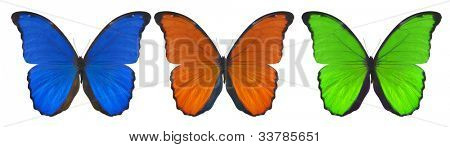 set of three color butterflies isolated on white background