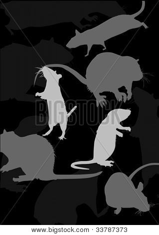 rat silhouettes isolated on black background