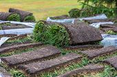 Turf Grass Roll, Green Grass Carpet In Roll For Lawn. Stack Of Turf Grass Rolls For The Landscaping poster