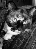 Cat Portrait In Black And White poster
