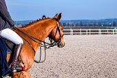 Horse Riding . Yohorse Riding . Young Girl Riding A Horse . Equestrian Sport In Details. Sport Horse poster