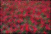 Red Green Texture From Distortion And Abstraction From Colored Flowers poster