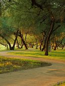 stock photo of mesquite  - Winding park walkway at sunset passing through a grove of mesquite trees - JPG