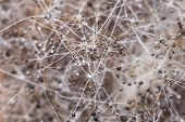 Extreme Macro Close-up Of Bread Mold (rhizopus) poster