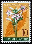 YUGOSLAVIA - CIRCA 1959: A stamp printed in Yugoslavia shows cultivated tobacco, series, circa 1959