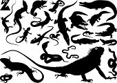 foto of newt  - Collection of silhouettes of snakes - JPG