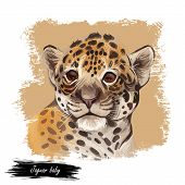 Jaguar Baby Tabby Portrait Closeup Of Animal. Panthera Carnivore Fauna. Wildlife Of South America, D poster