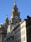 Historic Liver Building In Liverpool poster