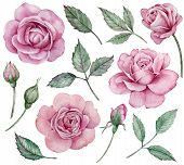 Realistic Pink Roses Clipart. Hand-drawn Watercolor Floral Set. Pink Flowers, Buds And Green Leaves. poster