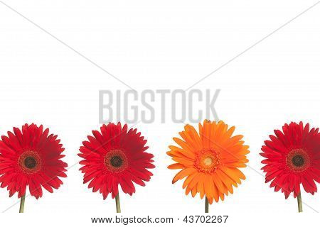 Stand Out Daisy: Red And Orange