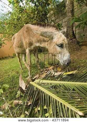 Small Donkey Feeding