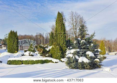 Winter Frozen Park
